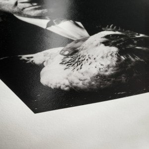 Atelier Fotodart - Papier Hahnemühle Photo Rag Baryta 315g